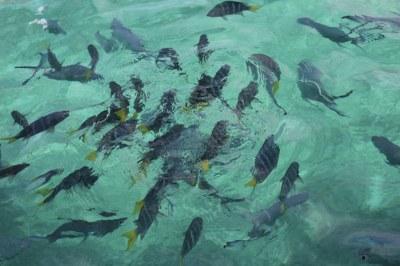 Fische vor St. Pierre
