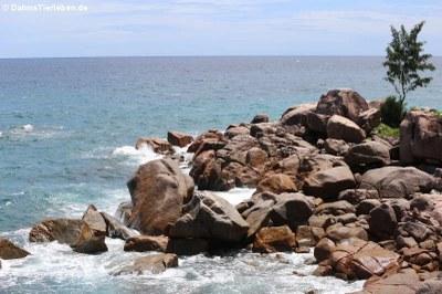 Felsiger Küstensabschnitt auf Praslin
