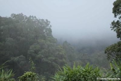 Nebel in Panoen Thung