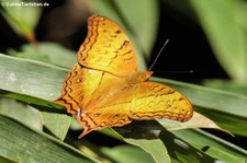 Kaeng Krachan National Park, Thailand