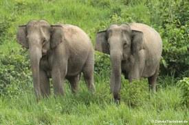 Elefanten im Kuiburi National Park