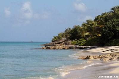 Strand in Frederiksted