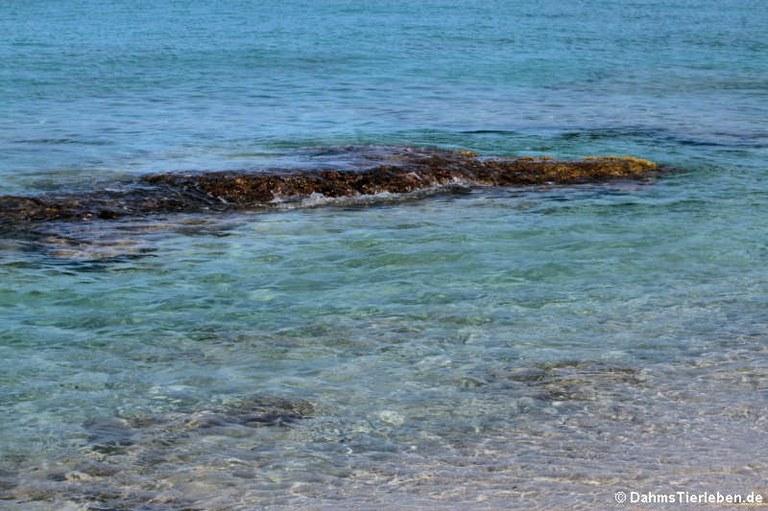 Karibisches Wasser vor Saint Croix