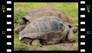 Film Riesenschildkröte