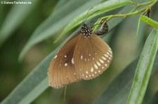 Eifalia Schmetterlingsgarten, Ahrhütte