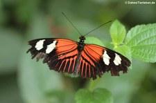 Schmetterlingsgarten Eifalia, Ahrhütte