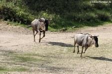 Burgers Zoo, Arnheim