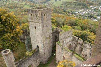 Blick auf den quadratischen Wehrturm