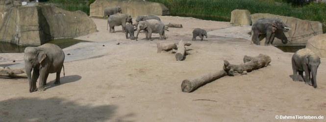 Außenanlage für für Asiatische Elefanten