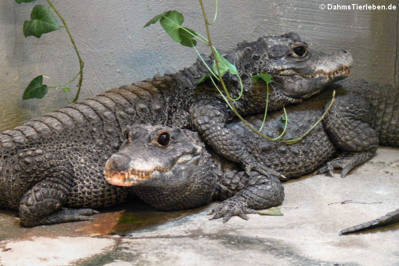 Reptilienzoo Königswinter — DahmsTierlebende