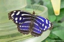 Schmetterlingsgarten Grevenmacher, Luxemburg
