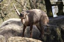 Tierpark Hellabrunn, München