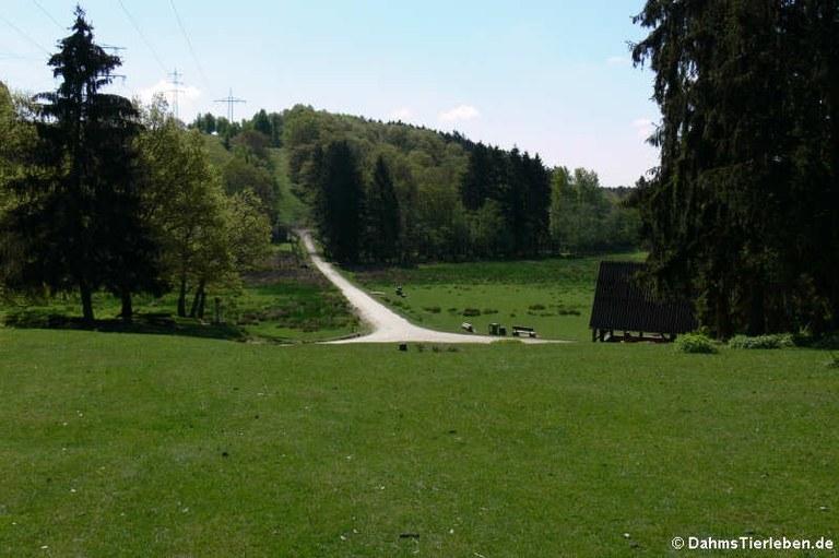 Blick in den Hochwildschutzpark