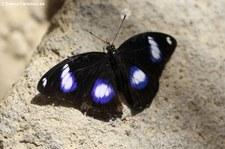 Garten der Schmetterlinge, Sayn
