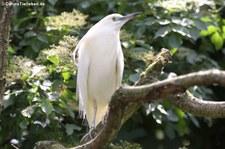 Weltvogelpark Walsrode